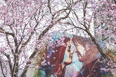 Mural_and_blossom.png